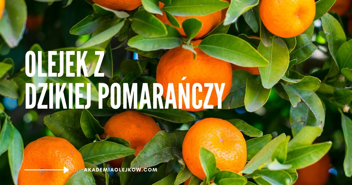 Olejek eteryczny z dzikiej pomarańczy